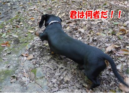 2_20090416100158.jpg