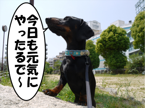 2_20090423001531.jpg