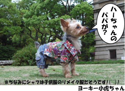 2_20090430213250.jpg