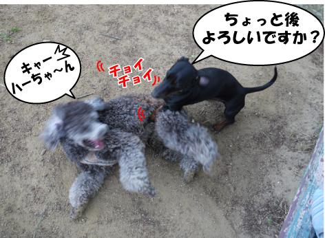 2_20090520125235.jpg