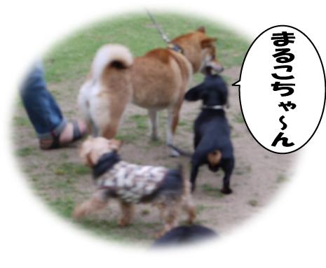 2_20090523224551.jpg