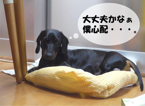2_20090525124900.jpg