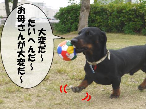 2_20090526120336.jpg