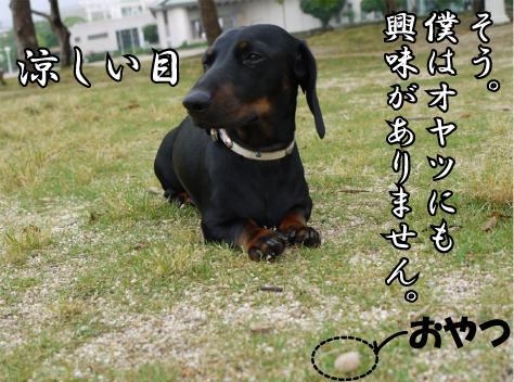 2_20090611185857.jpg