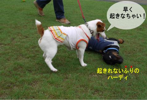 2_20090723003613.jpg
