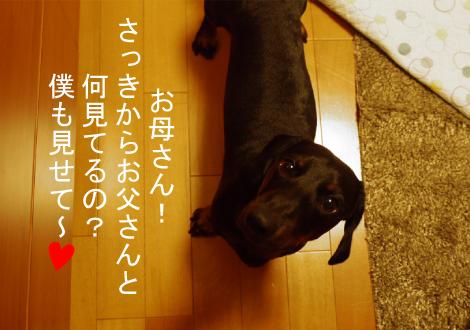 2_20090803010348.jpg