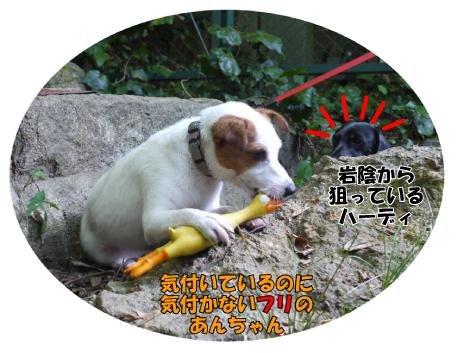 2_20090911170536.jpg