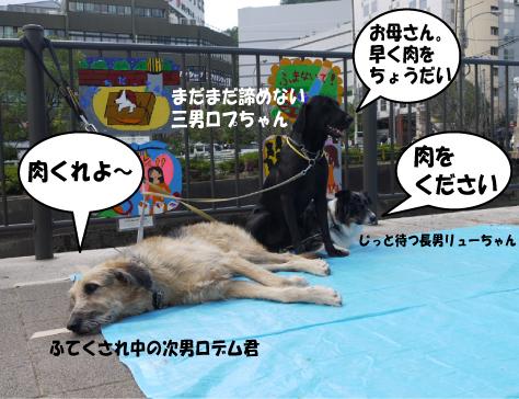 2_20091014001329.jpg