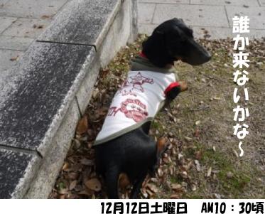 2_20091213060321.jpg