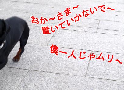 3_20090316233116.jpg