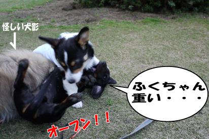 3_20090327001034.jpg