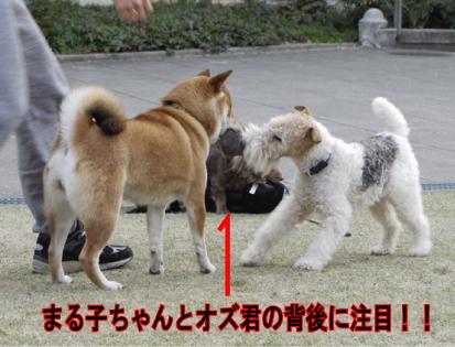 3_20090401110221.jpg