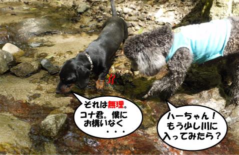 3_20090414113556.jpg