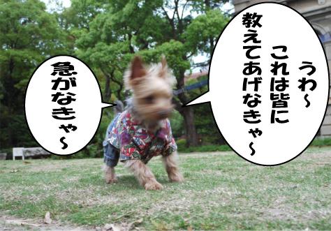 3_20090430213444.jpg