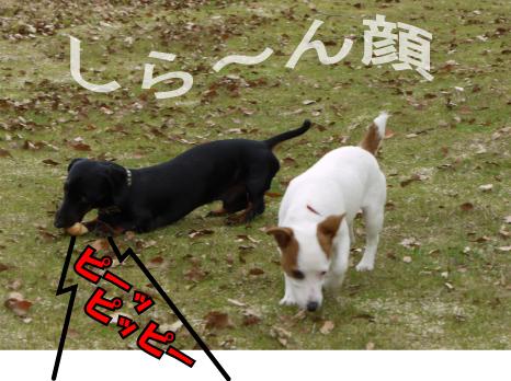 3_20090507222451.jpg