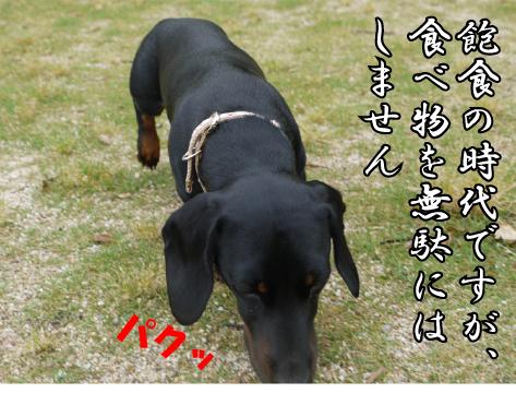 3_20090611190127.jpg