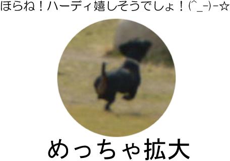 3_20090618140238.jpg