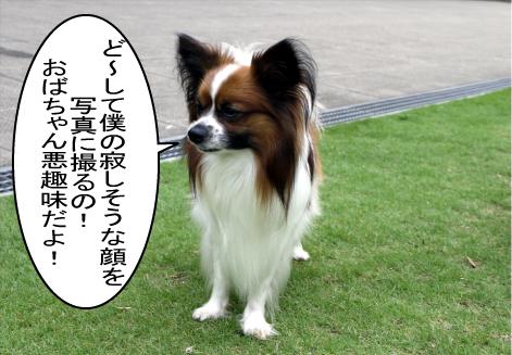 3_20090629164333.jpg