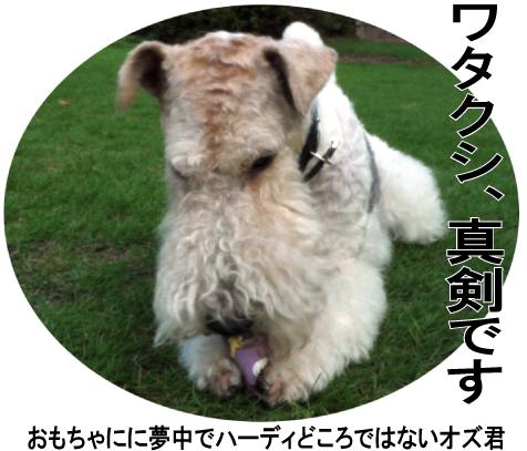 3_20090707194547.jpg
