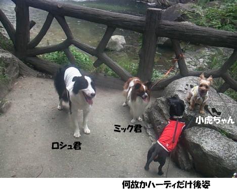 3_20090720221636.jpg