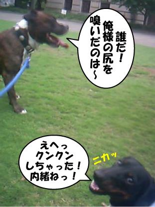 3_20090825115803.jpg