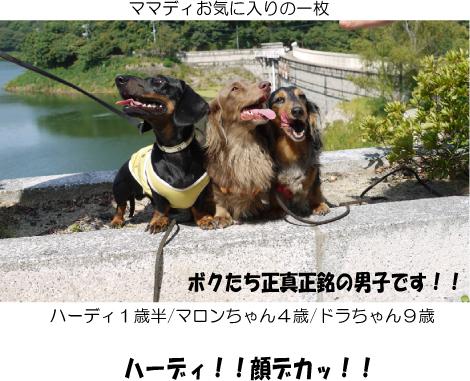 3_20090925141119.jpg