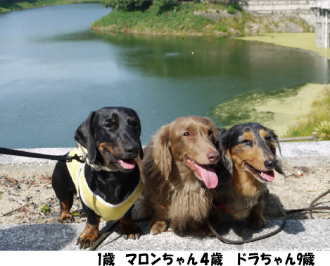 3_20091001121854.jpg