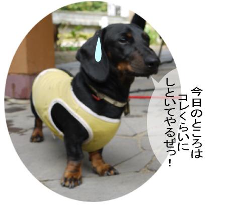 3_20091003013112.jpg