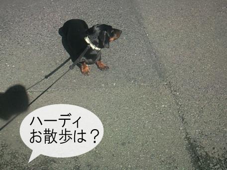 3_20091006180313.jpg