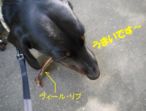 3_20091019234102.jpg