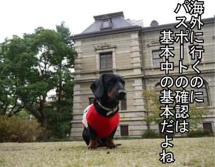 3_20091122111032.jpg