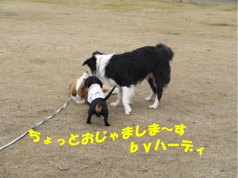 3_20091129001948.jpg