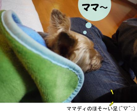 3_20091231004314.jpg
