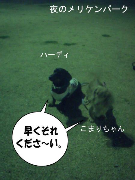 3_20100125111041.jpg