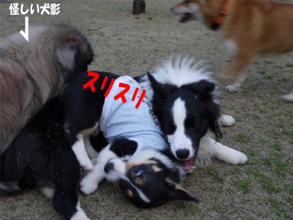 4_20090327001545.jpg