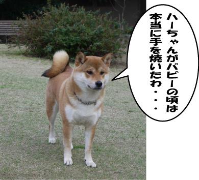4_20090331010714.jpg