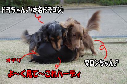 4_20090401110634.jpg