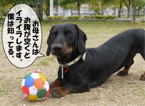 4_20090526120450.jpg