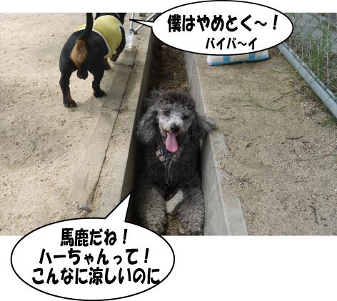 4_20090713134312.jpg