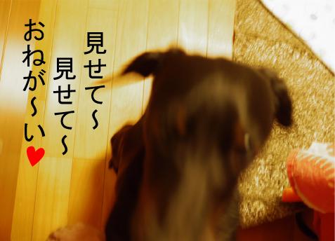 4_20090803010804.jpg
