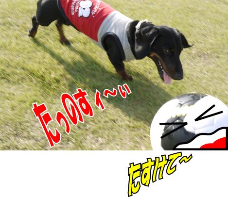 4_20090805141525.jpg