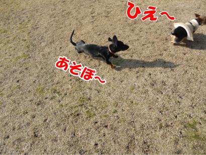 5_20090310124310.jpg