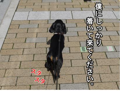 5_20090316233741.jpg