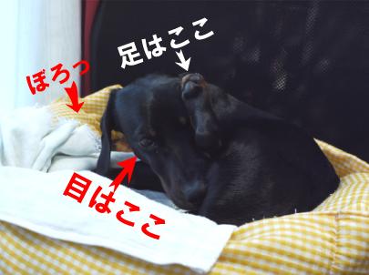 5_20090319103829.jpg