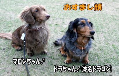 5_20090401110939.jpg