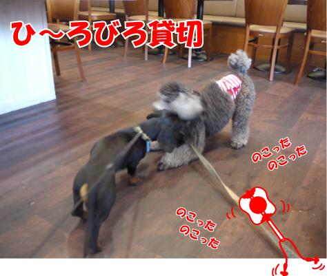 5_20090520131321.jpg