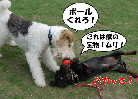 5_20090530160957.jpg