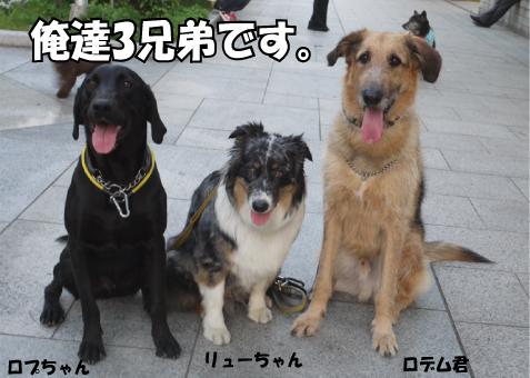 5_20090603132939.jpg