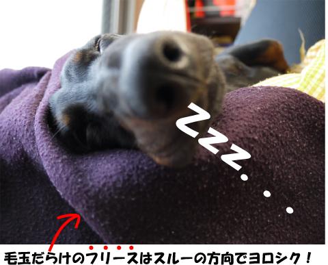 5_20090610152245.jpg