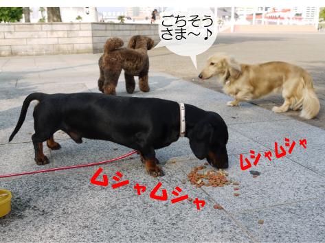 5_20090618141543.jpg